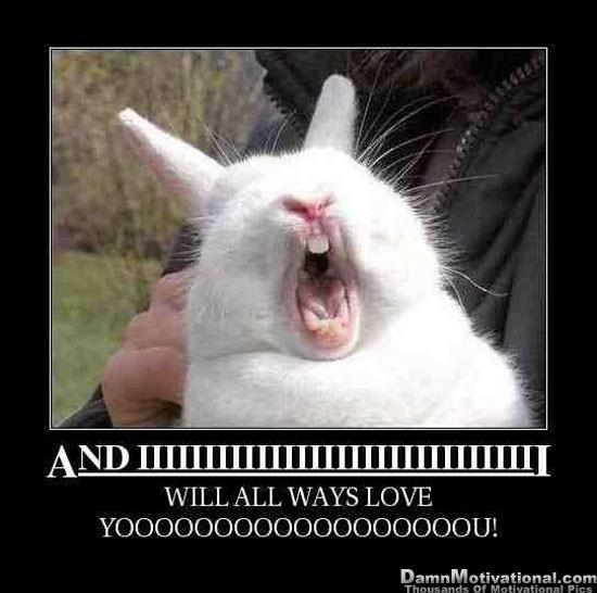 Funny Sweetest Day Meme : Animal meme cakey hankerson great adventures