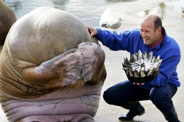 walrus birthday surprise