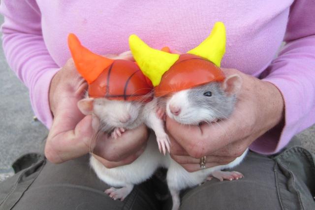 Viking Rats