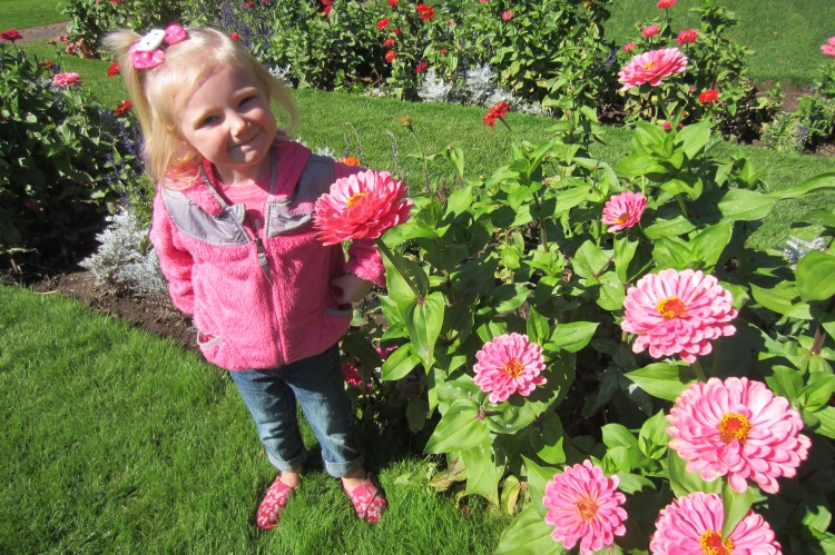 Zinnias and Flowers